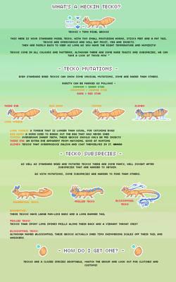 teckos - tiny pixel geckos, species info sheet!