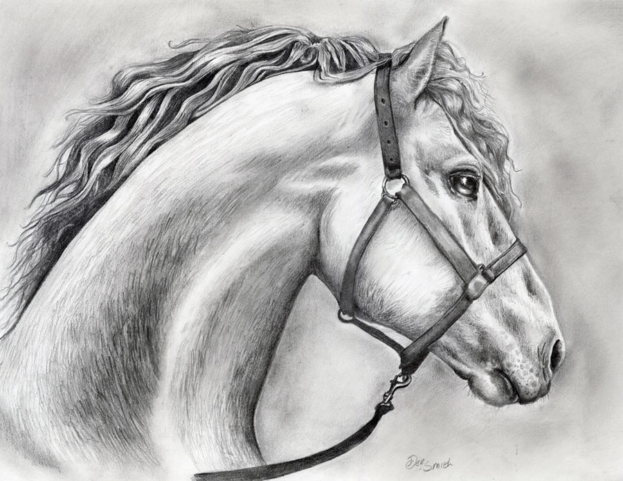 Horse drawing in pencil by deedeedee123