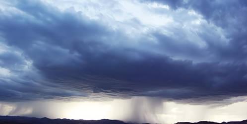 Lavender Rain