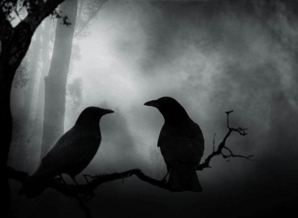 Dark Crow by Vickie666 on DeviantArt