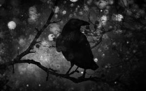 Winternacht by Vickie666