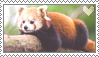 Red Panda Stamp 1 by Stamp0