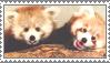Red Panda Stamp 2