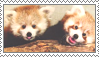 Red Panda Stamp 2 by Stamp0
