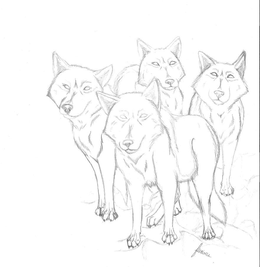 Pack Of Wolves By Furiouswolf On DeviantArt