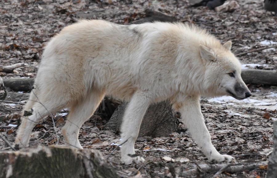 wolf lake chat sites Regarder wolf lake en streaming, voir wolf lake, voir wolf lake en streaming, voir wolf lake gratuitement, wolf lake youwatch, wolf lake youtube, wolf lake stream complet, wolf lake exashare, wolf lake complet, wolf lake sans coupure, wolf lake sans limite, wolf lake vf, wolf lake en vf, wolf lake vostfr, wolf lake en vostfr, wolf lake vk, wolf .