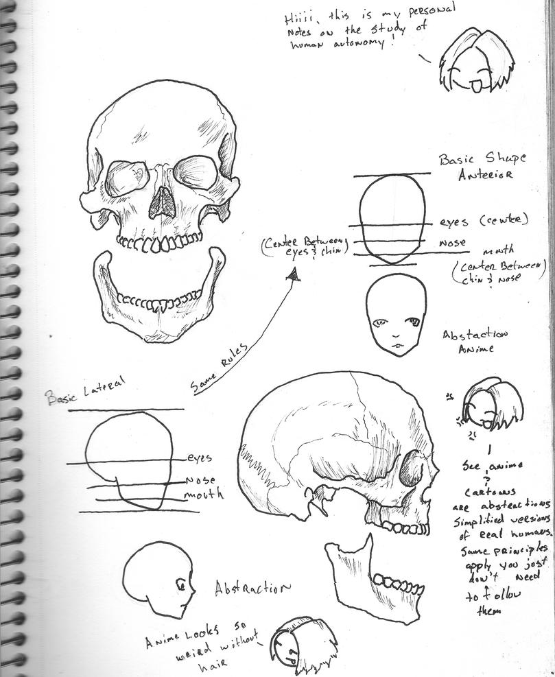 Anatomical head coloring pages for Skull coloring pages anatomy