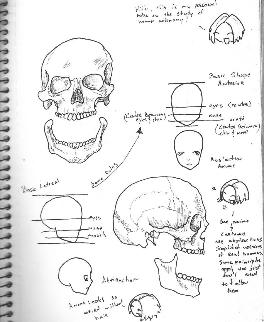 Skull Anatomy Tutorial by TheDrunk on DeviantArt