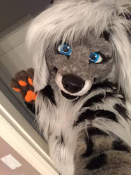 Cassidy Civet Fursuit Debut Photo