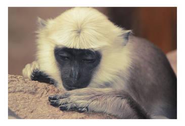 zoo_monkey by h3design