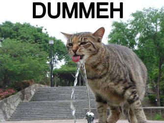 Dummeh LOLCat by GreenMonkeyMakiRoll