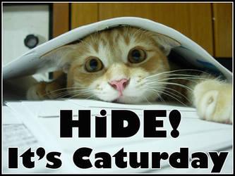 Hide, It's Caturday by GreenMonkeyMakiRoll