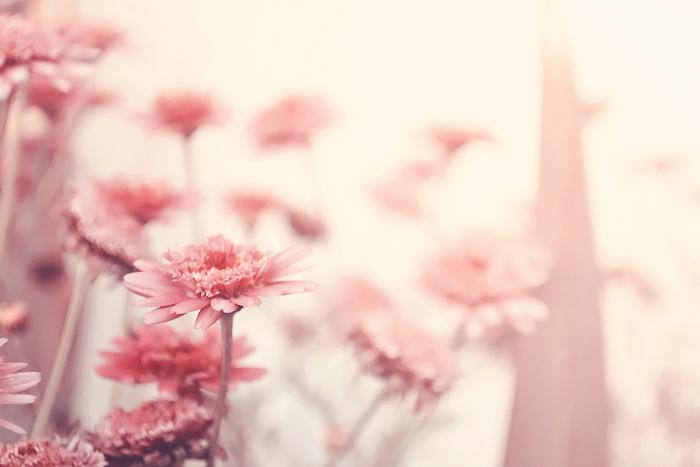Last Bloom. by wijnoogst