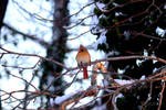 Bird On A Limb by lisalj76