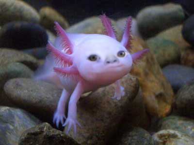 Ugly baby fish by monkeynugget07 on deviantart for Ugly fish pictures