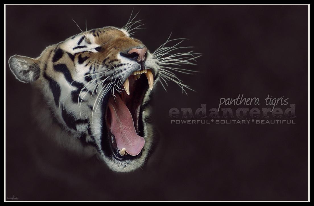 Endangered: Panthera Tigris by LosingSarah