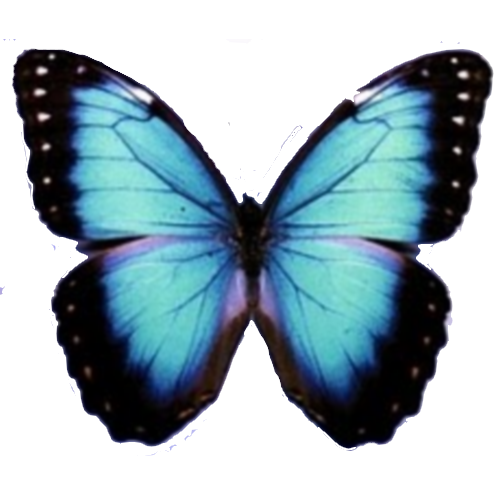 Mariposa PNG by ~PoliiLove on deviantART