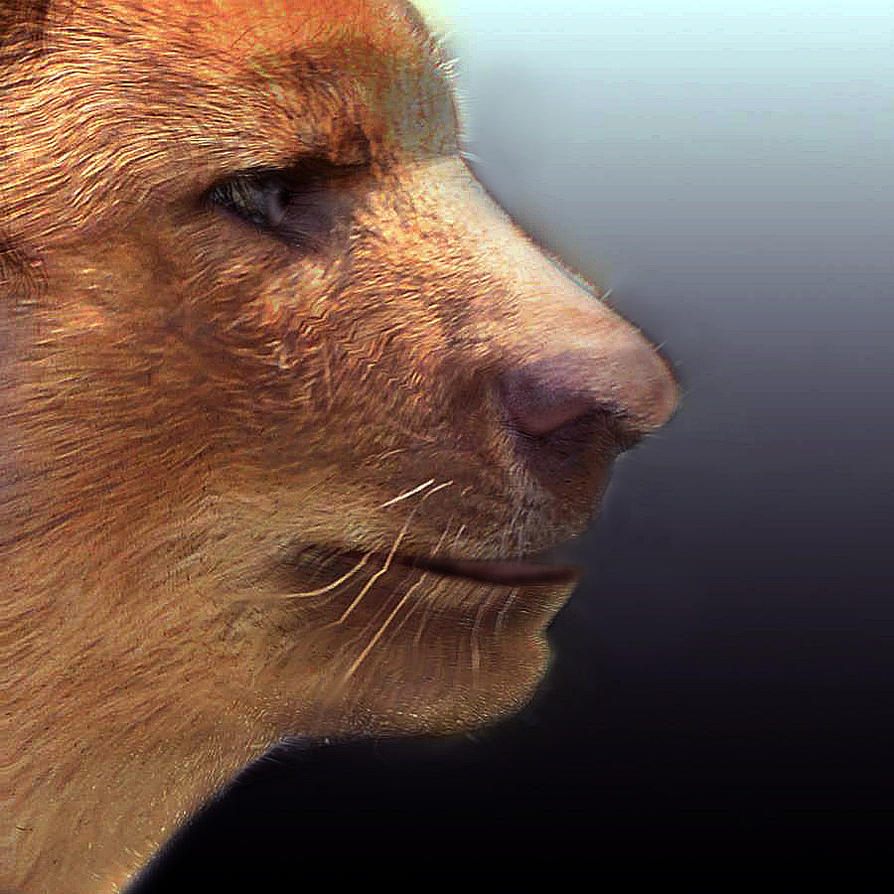 Dhole Morph by oboroten