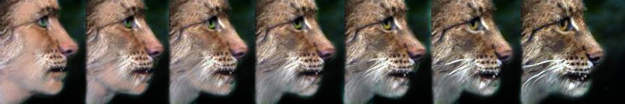 Lynx Profile 2 by oboroten