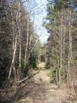 Spring forest 2