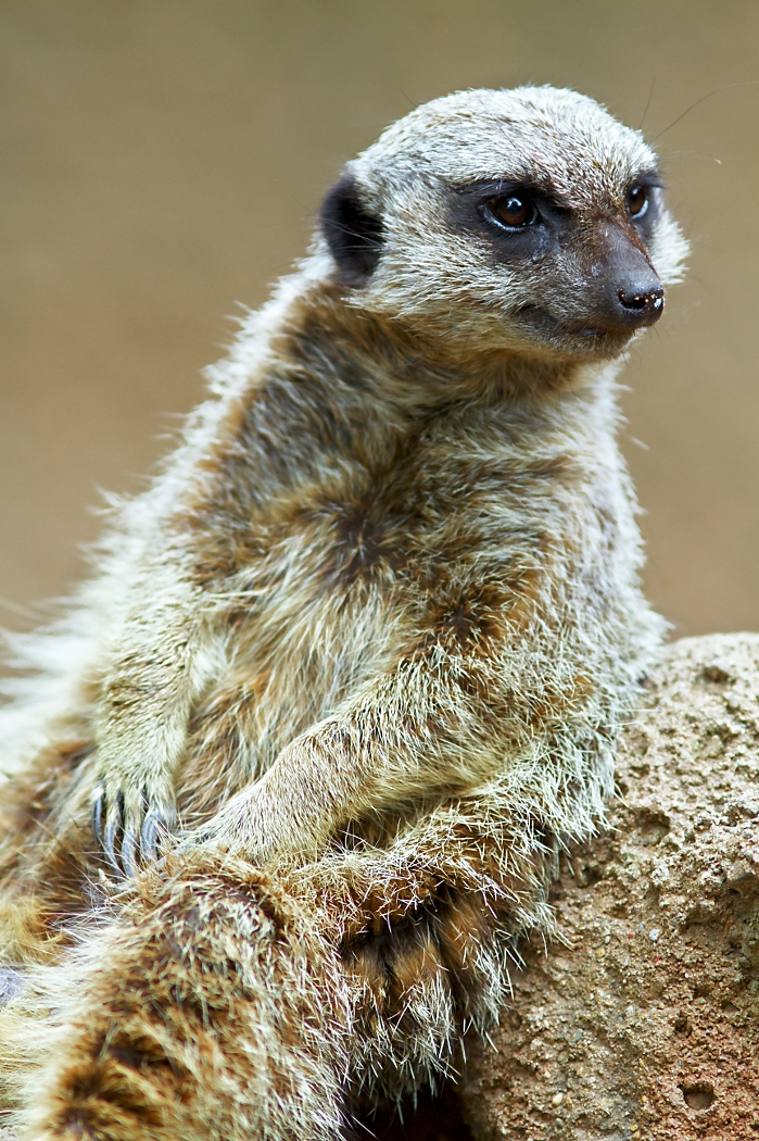 timon_chilling_smaller_resolution_by_tmbroe01-d4ywrqr.jpg