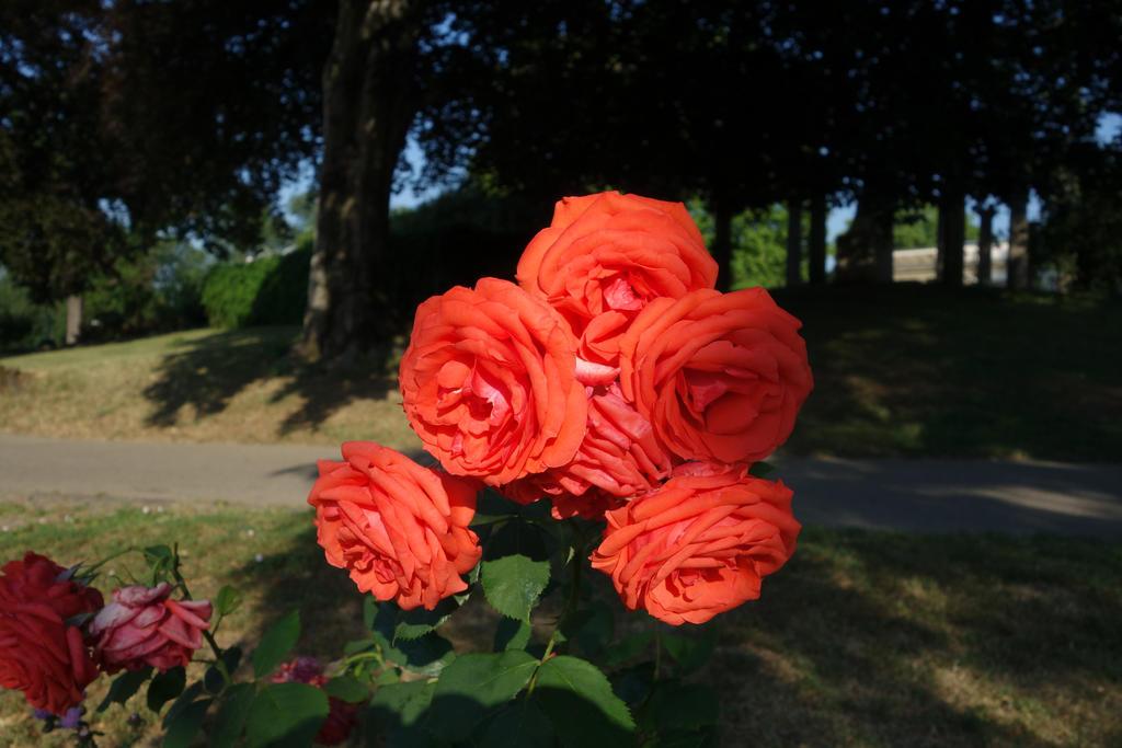 Rose 4 by Amigo-Rosenstein