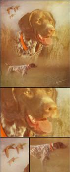Pepper : Pet Portraits
