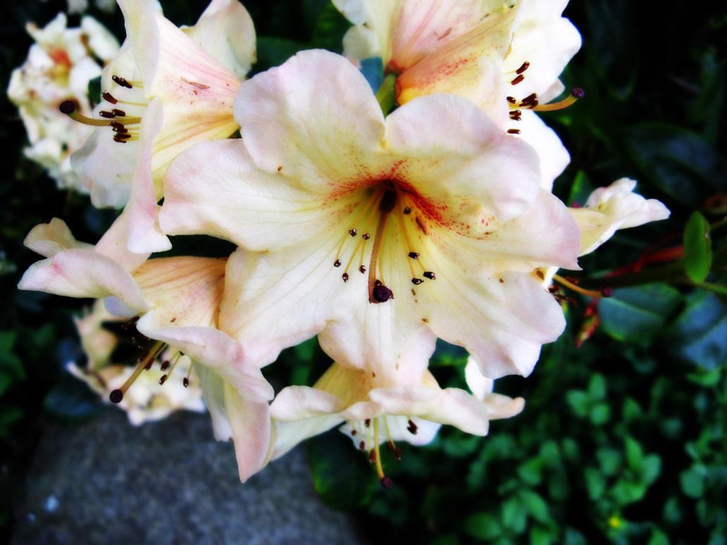 San Francisco Flower 1 by Verie on DeviantArt
