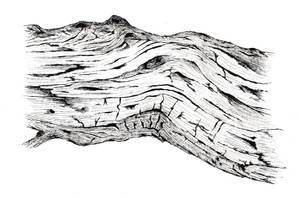 Driftwood (micron pen)