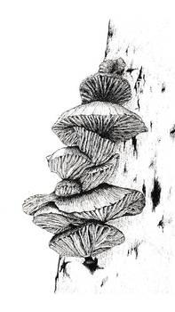 Fungi (micron pen)