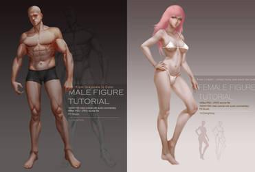 Female / Male Body Tutorial