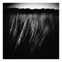 Virus Meadow by Art2mys
