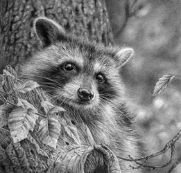 Young Racoon Study by denismayerjr