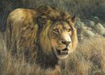 Fearless Warrior  -   Fur Detail