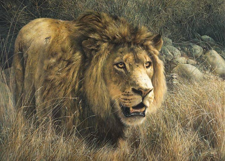 Fearless Warrior  -   Fur Detail by denismayerjr