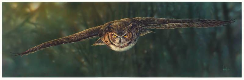 Aerial Intensity -  Great Horned Owl by denismayerjr