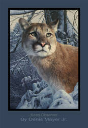 Cougar - Oil painting on canvas.