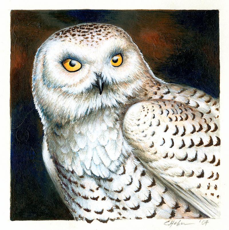 Snowy Owl by Heliocyan