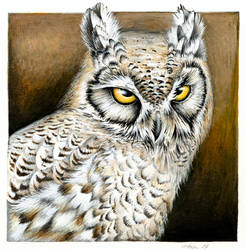 Great Horned Owl by Heliocyan