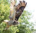 Owl Sanctuary Cornwall