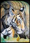 Detail Tiger