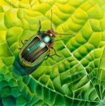 Bob the bug