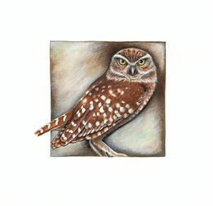 Burrowing owl by Heliocyan