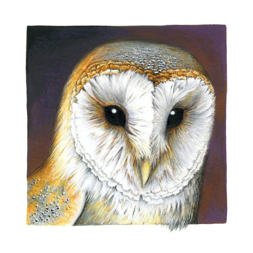 Barn Owl miniature by Heliocyan