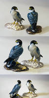 Peregrine Falcon by Heliocyan