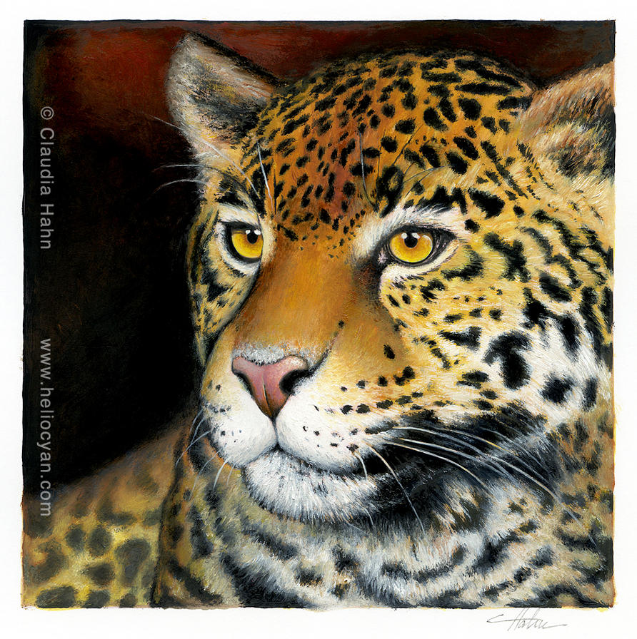 Leopard in the evening sun by Heliocyan