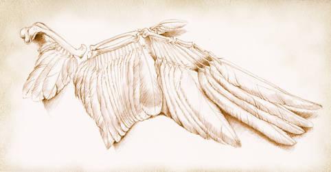 Bones by Heliocyan