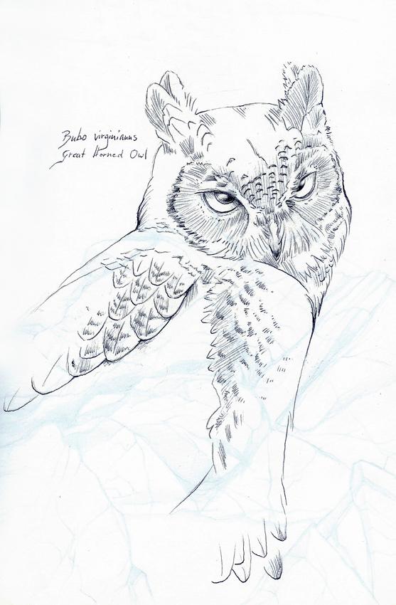 Great horned owl sketch by Heliocyan