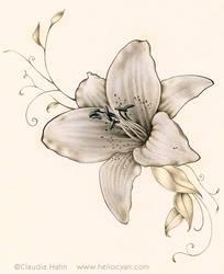 Lilie by Heliocyan