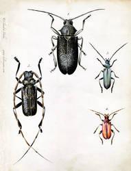 Longhorn Beetles by Heliocyan